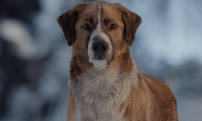 Dog-Friendly Screening: The Call Of The Wild
