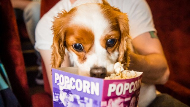 Dog-Friendly Cinema
